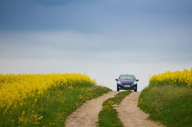 voiture dans champs